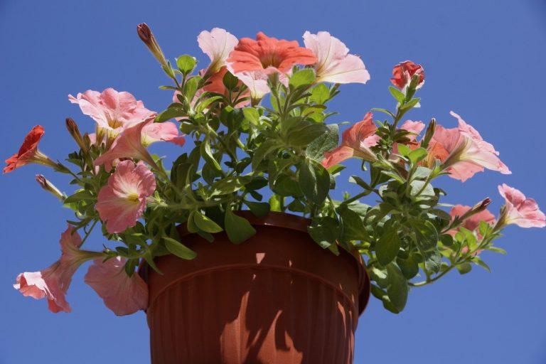 Jakie kwiaty doniczkowe do domu?