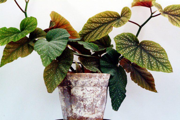 Jakie rośliny do mieszkania?